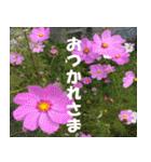 花のスタンプ(個別スタンプ:21)
