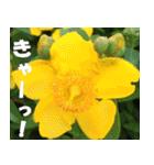 花のスタンプ(個別スタンプ:22)