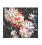 花のスタンプ(個別スタンプ:23)