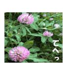 花のスタンプ(個別スタンプ:25)
