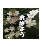 花のスタンプ(個別スタンプ:26)
