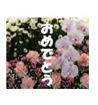 花のスタンプ(個別スタンプ:28)
