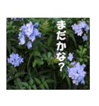 花のスタンプ(個別スタンプ:29)