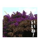 花のスタンプ(個別スタンプ:30)