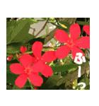 花のスタンプ(個別スタンプ:31)