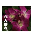 花のスタンプ(個別スタンプ:32)