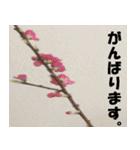 花のスタンプ(個別スタンプ:33)