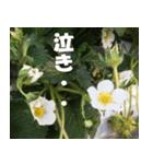 花のスタンプ(個別スタンプ:34)