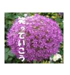 花のスタンプ(個別スタンプ:36)