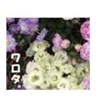 花のスタンプ(個別スタンプ:39)