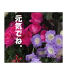花のスタンプ(個別スタンプ:40)