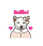 俺やで!ゆかいな白柴わんこ6(ガーリー編)(個別スタンプ:01)