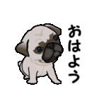 動く!パグっち(個別スタンプ:5)