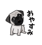 動く!パグっち(個別スタンプ:8)