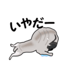 動く!パグっち(個別スタンプ:15)