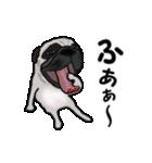 動く!パグっち(個別スタンプ:17)