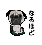 動く!パグっち(個別スタンプ:23)
