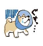 しばんばん(個別スタンプ:39)