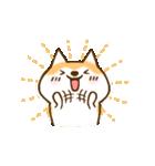 柴ちん3 柴犬と散歩(個別スタンプ:01)