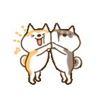 柴ちん3 柴犬と散歩(個別スタンプ:02)