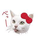あなごちゃん×ハローキティ(個別スタンプ:01)