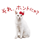 あなごちゃん×ハローキティ(個別スタンプ:03)