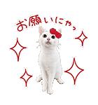 あなごちゃん×ハローキティ(個別スタンプ:16)