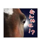 大阪弁をしゃべる馬のスタンプ 第二弾