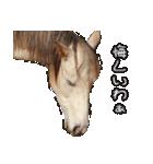 大阪弁をしゃべる馬のスタンプ 第二弾(個別スタンプ:03)