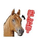 大阪弁をしゃべる馬のスタンプ 第二弾(個別スタンプ:05)