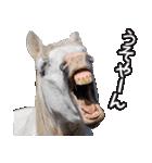 大阪弁をしゃべる馬のスタンプ 第二弾(個別スタンプ:10)