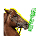 大阪弁をしゃべる馬のスタンプ 第二弾(個別スタンプ:12)