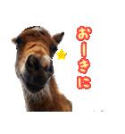 大阪弁をしゃべる馬のスタンプ 第二弾(個別スタンプ:16)