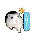 ハムスター☆だいふく ver.2(個別スタンプ:1)