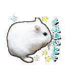 ハムスター☆だいふく ver.2(個別スタンプ:5)