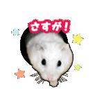 ハムスター☆だいふく ver.2(個別スタンプ:7)