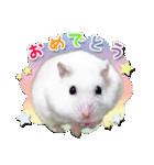 ハムスター☆だいふく ver.2(個別スタンプ:8)