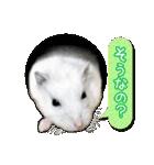 ハムスター☆だいふく ver.2(個別スタンプ:11)