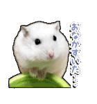 ハムスター☆だいふく ver.2(個別スタンプ:14)