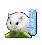 ハムスター☆だいふく ver.2(個別スタンプ:16)