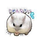 ハムスター☆だいふく ver.2(個別スタンプ:20)