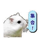 ハムスター☆だいふく ver.2(個別スタンプ:21)