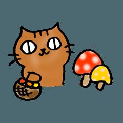 猫のトラタ8