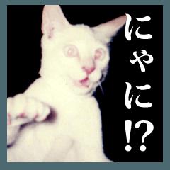 ちょっと荒削りなネコ写真スタンプ