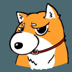ジト柴 ~ジト目な柴犬~
