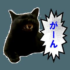 ぶさ猫テン