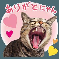 リアルにゃんこ★Part 1