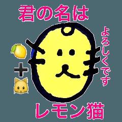 君の名は檸檬「レモン」猫
