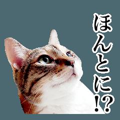 猫の写真で作ったスタンプ