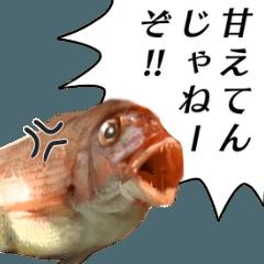 [LINEスタンプ] 魚だよ!